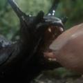 tn_slugs